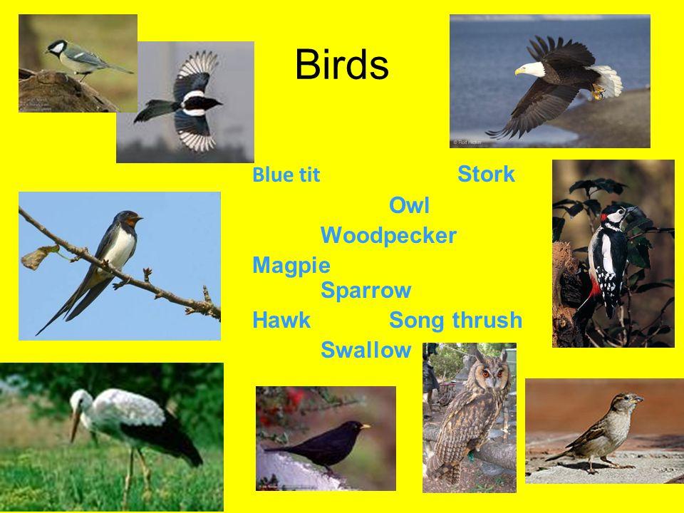 Birds Blue tit Stork Owl Woodpecker Magpie Sparrow HawkSong thrush Swallow