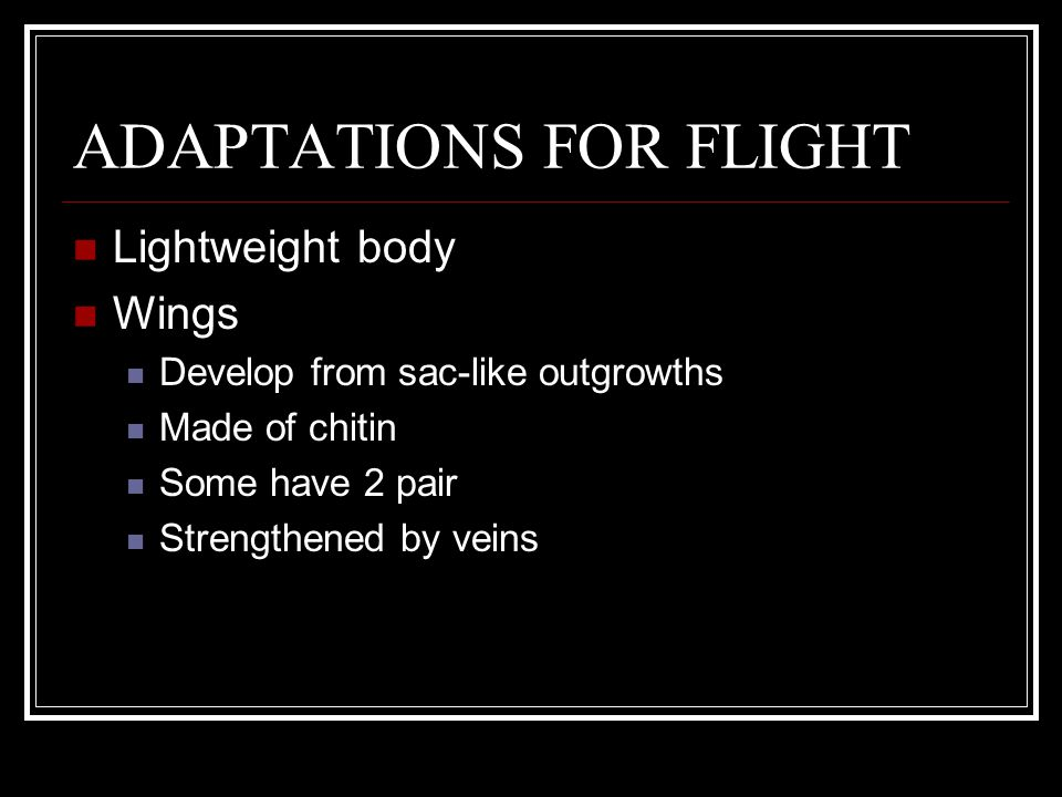 ADAPTATIONS FOR FLIGHT Lightweight body Wings Develop from sac-like outgrowths Made of chitin Some have 2 pair Strengthened by veins