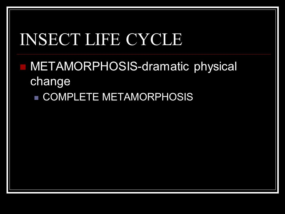 INSECT LIFE CYCLE METAMORPHOSIS-dramatic physical change COMPLETE METAMORPHOSIS