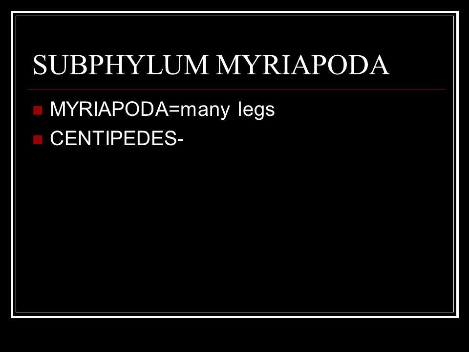 SUBPHYLUM MYRIAPODA MYRIAPODA=many legs CENTIPEDES-