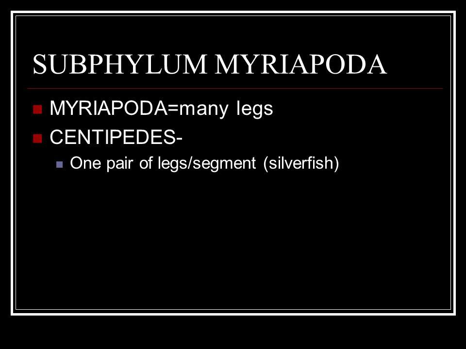 SUBPHYLUM MYRIAPODA MYRIAPODA=many legs CENTIPEDES- One pair of legs/segment (silverfish)