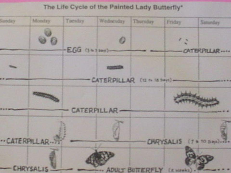 A caterpillar in the J shape.
