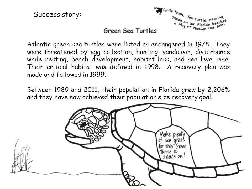 Success story: Atlantic green sea turtles were listed as endangered in 1978. They were threatened by egg collection, hunting, vandalism, disturbance w