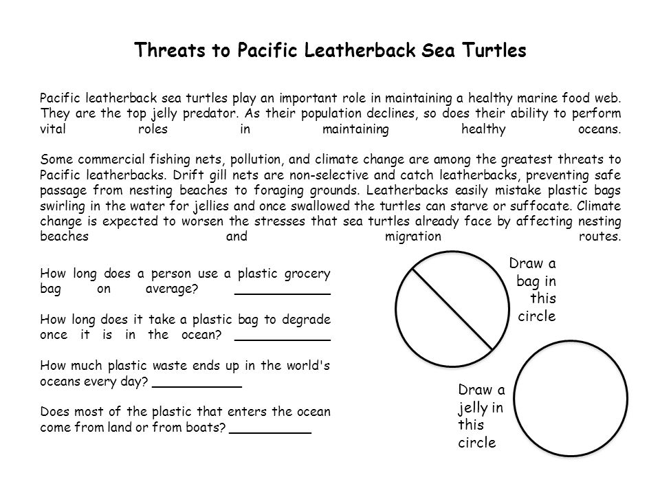 Know what is happening to Pacific leatherback sea turtles and share that with your friends and family.