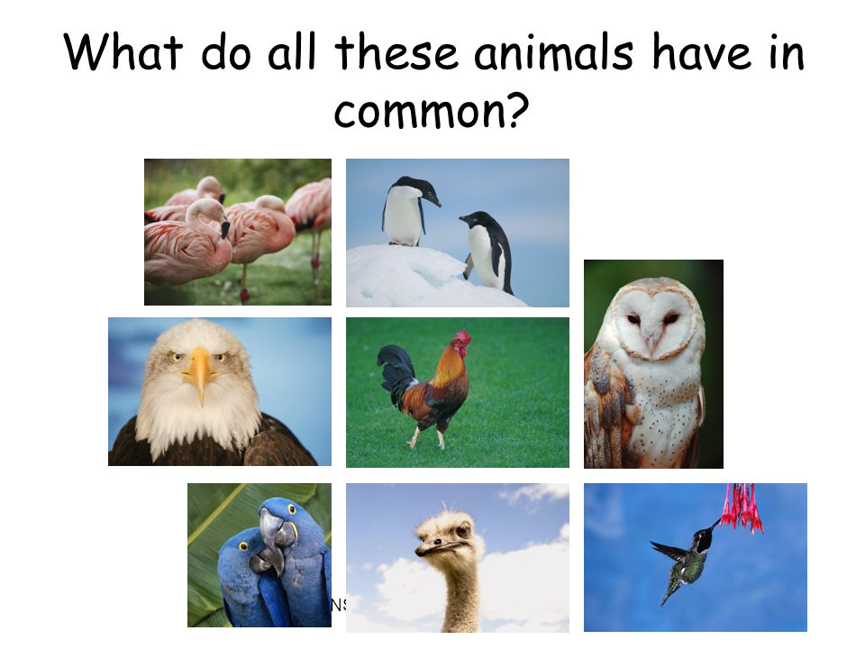 NSF North Mississippi GK8 What do all these animals have in common?