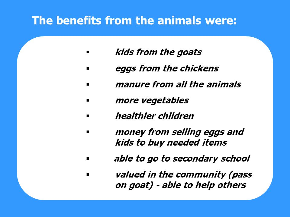 kids from the goats eggs from the chickens manure from all the animals more vegetables healthier children money from selling eggs and kids to buy needed items able to go to secondary school valued in the community (pass on goat) - able to help others The benefits from the animals were: