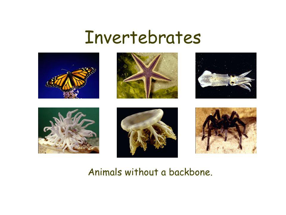 Vertebrates Animals with a backbone.