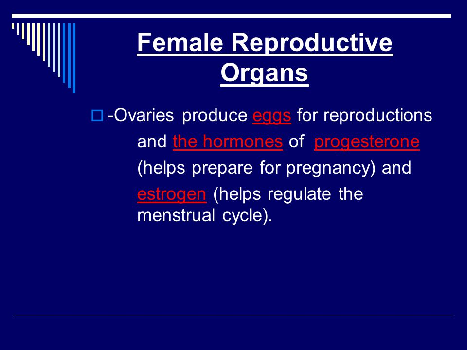 The Pathways of Eggs The oviduct or fallopian tube is a tube located near each ovary.
