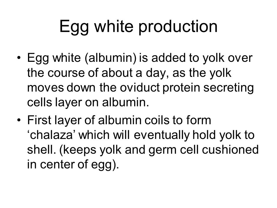 Egg white production Egg white (albumin) is added to yolk over the course of about a day, as the yolk moves down the oviduct protein secreting cells layer on albumin.