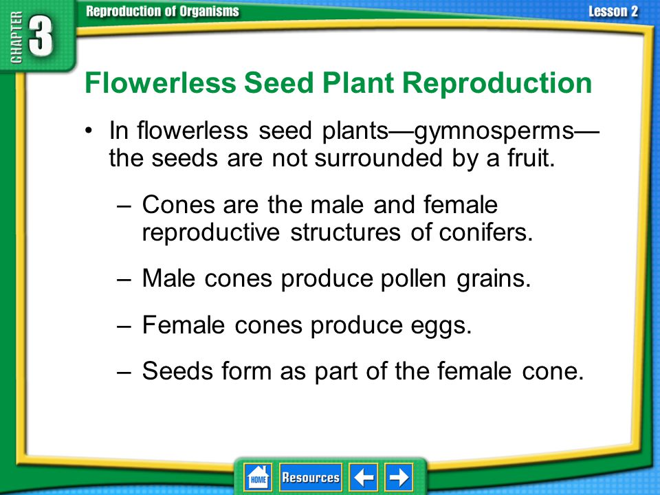 The Role of Ovules and Seeds The female reproductive structure of a seed plant contains one or more ovules.
