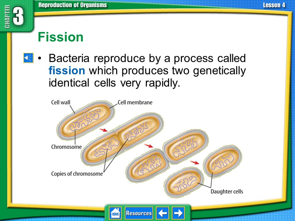 Types of Asexual Reproduction Prokaryotes reproduce asexually by cell division that does not involve mitosis.