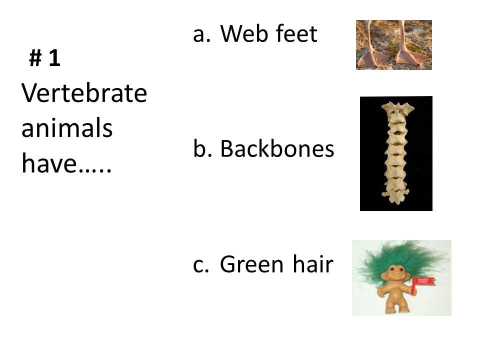 # 1 a.Web feet b.Backbones c.Green hair Vertebrate animals have…..