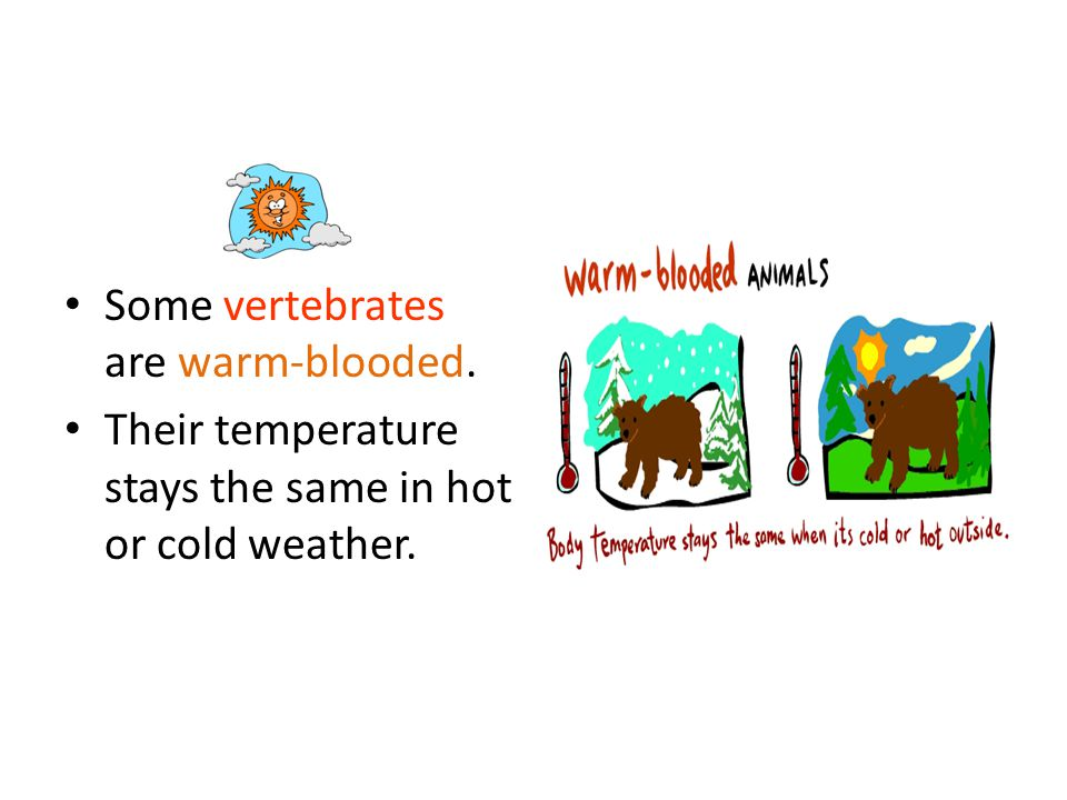 Some vertebrates are warm-blooded. Their temperature stays the same in hot or cold weather.
