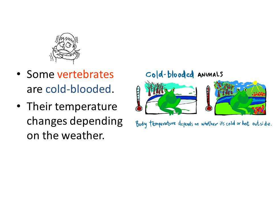 Some vertebrates are cold-blooded. Their temperature changes depending on the weather.
