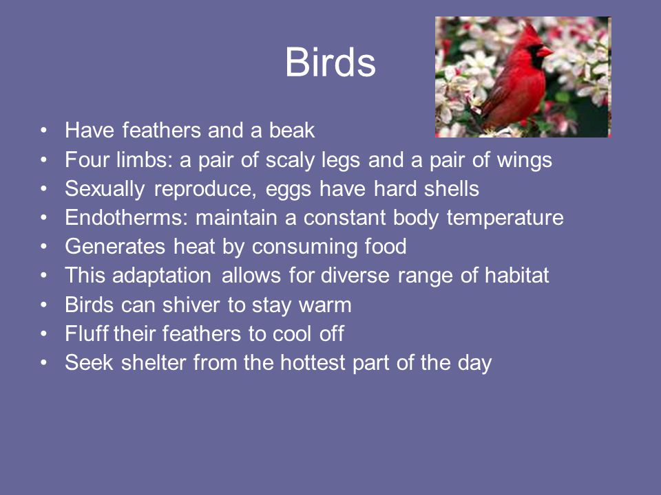 Birds Have feathers and a beak Four limbs: a pair of scaly legs and a pair of wings Sexually reproduce, eggs have hard shells Endotherms: maintain a c