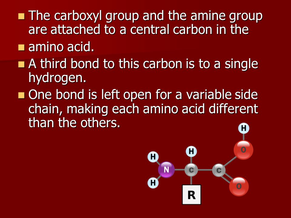 The carboxyl group and the amine group are attached to a central carbon in the The carboxyl group and the amine group are attached to a central carbon in the amino acid.