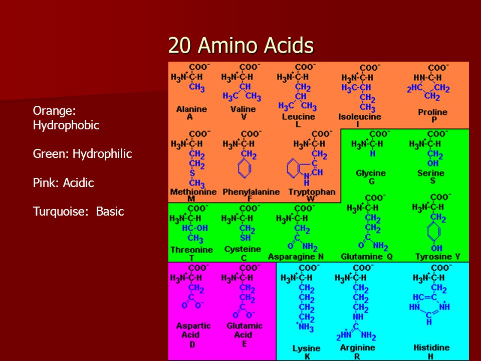 20 Amino Acids Orange: Hydrophobic Green: Hydrophilic Pink: Acidic Turquoise: Basic