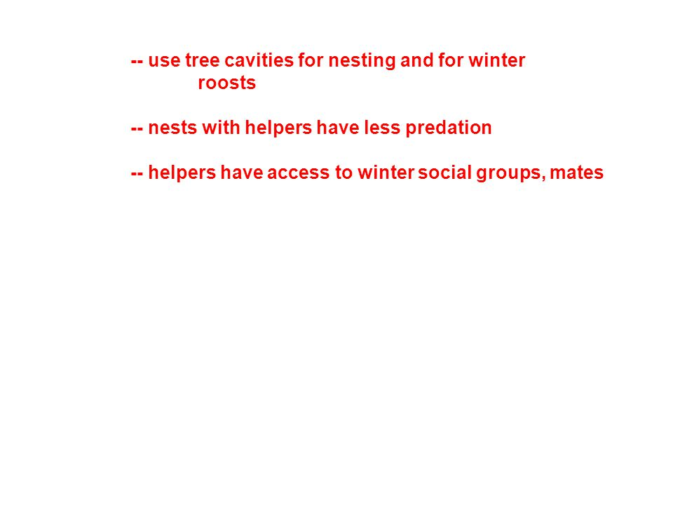 -- use tree cavities for nesting and for winter roosts -- nests with helpers have less predation -- helpers have access to winter social groups, mates