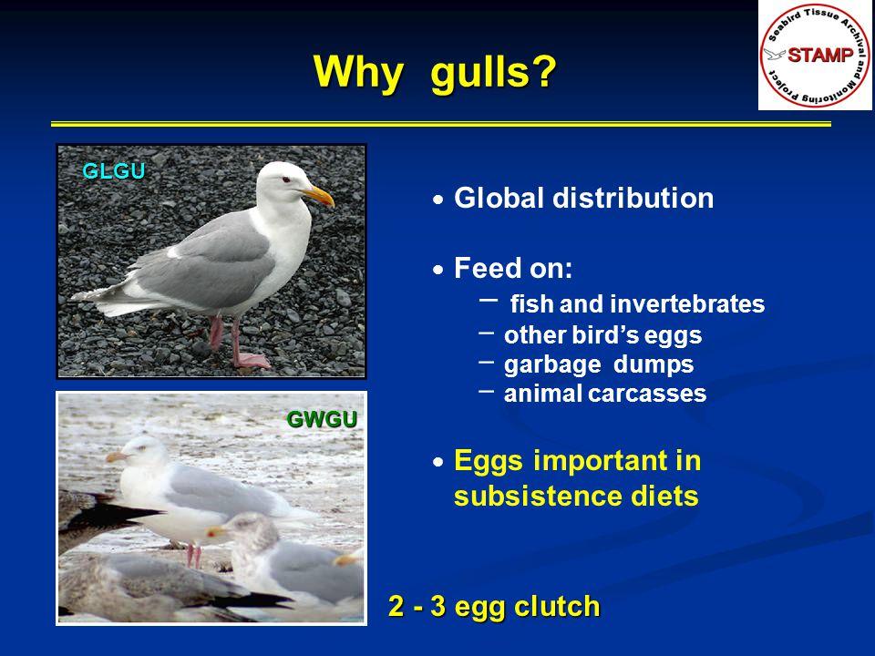 Why gulls.