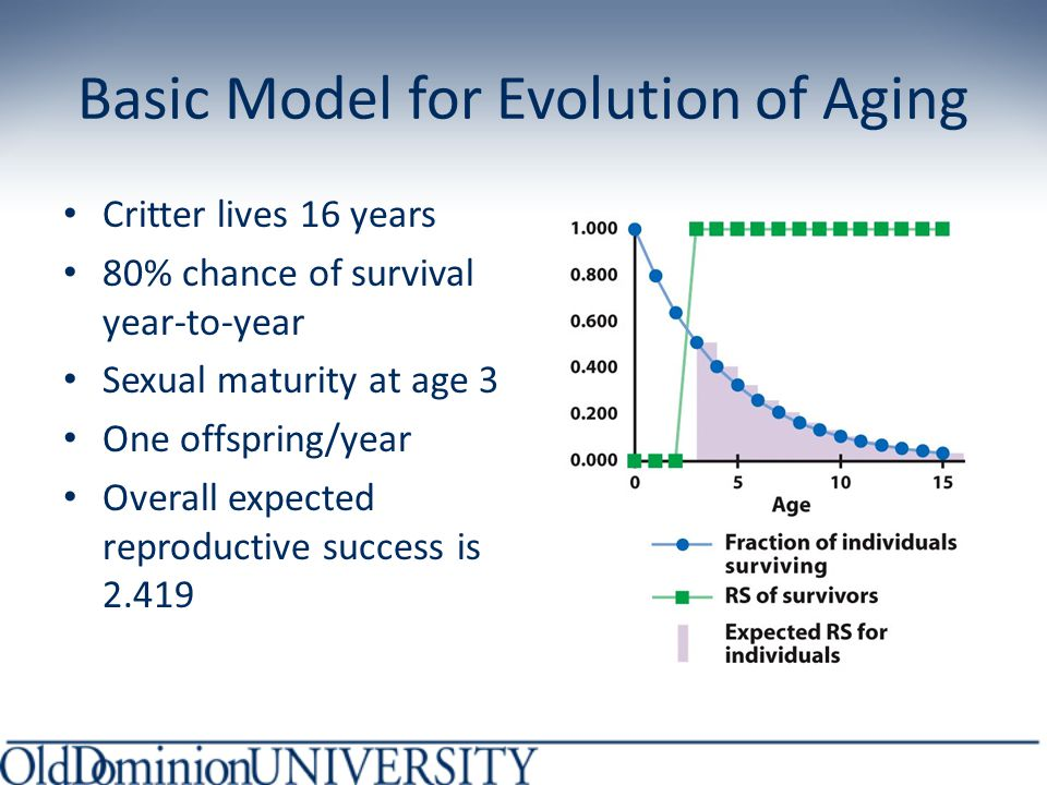 Basic Model for Evolution of Aging Critter lives 16 years 80% chance of survival year-to-year Sexual maturity at age 3 One offspring/year Overall expected reproductive success is 2.419