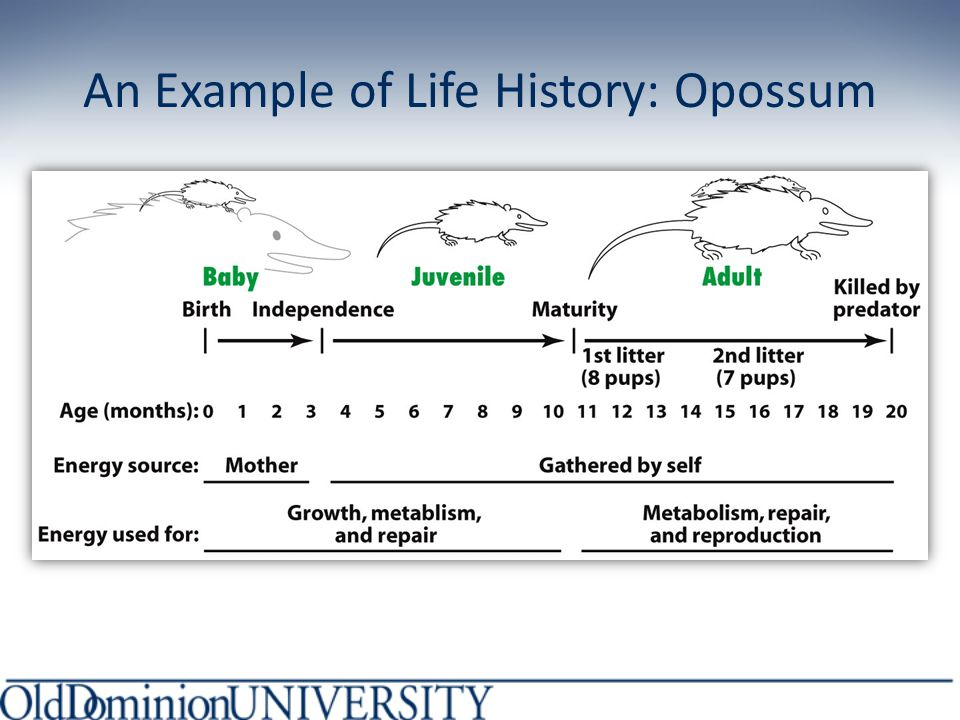 The Evolutionary Theory Recap: Tradeoff between self-maintenance and reproduction Aging caused by failure to FULLY repair damage: slower path to death 2 reasons: 1.Deleterious mutations 2.Trade-offs between repair and reproduction
