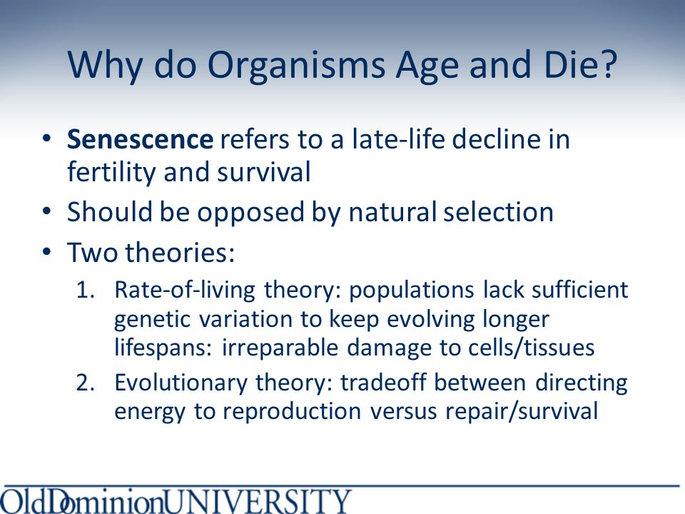 Effect of Deleterious Mutation Mutation causes early death at 14 years NO other alterations Overall expected reproductive success is 2.340 Slightly reduced relative to WT population (not a big change in survival): WEAK SELECTION