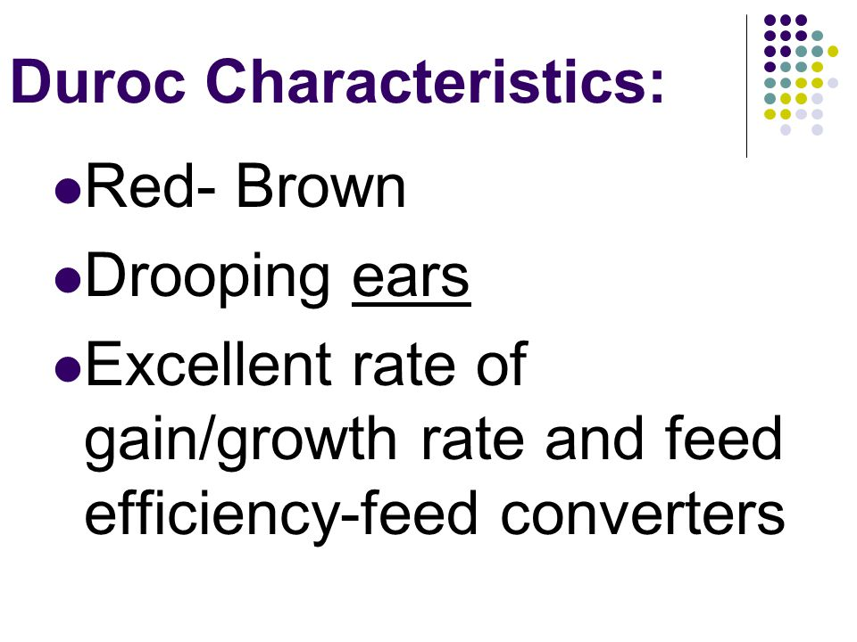 Duroc Characteristics: Red- Brown Drooping ears Excellent rate of gain/growth rate and feed efficiency-feed converters