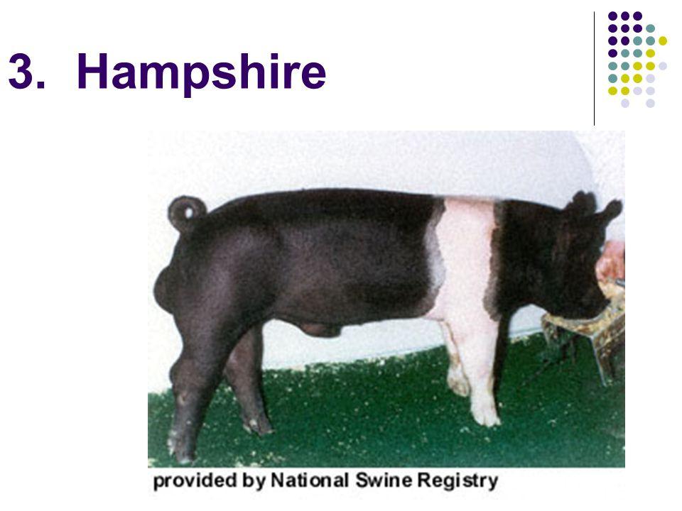 3. Hampshire