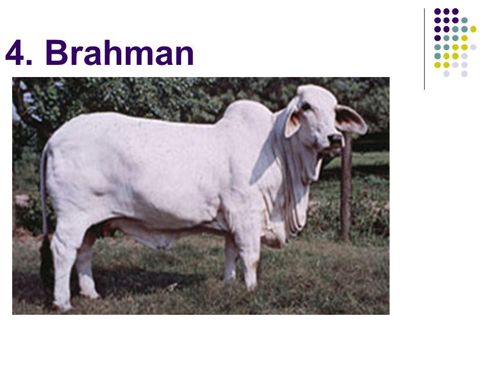4. Brahman