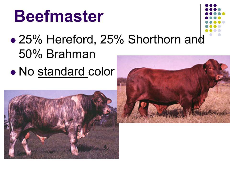 Beefmaster 25% Hereford, 25% Shorthorn and 50% Brahman No standard color