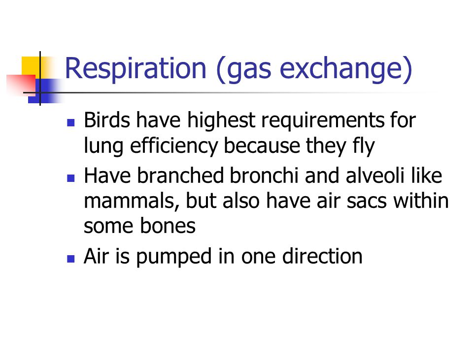 Respiration (gas exchange) Birds have highest requirements for lung efficiency because they fly Have branched bronchi and alveoli like mammals, but al