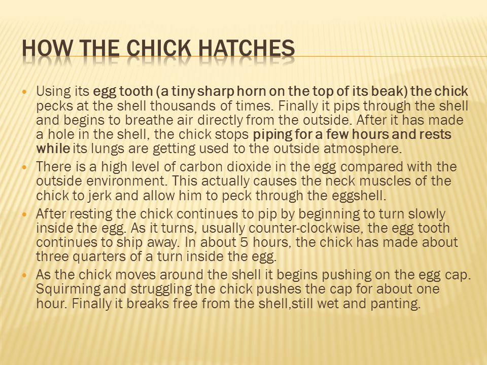 Break Out= Cracking egg to see albumen Tight albumen High yolk