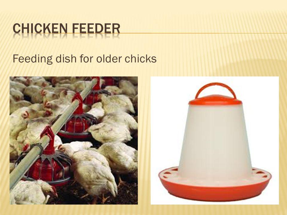 Feeding dish for baby chicks