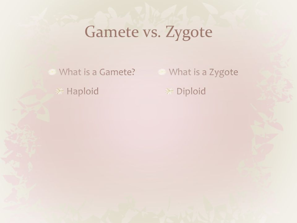 Gamete vs. Zygote What is a Zygote Diploid