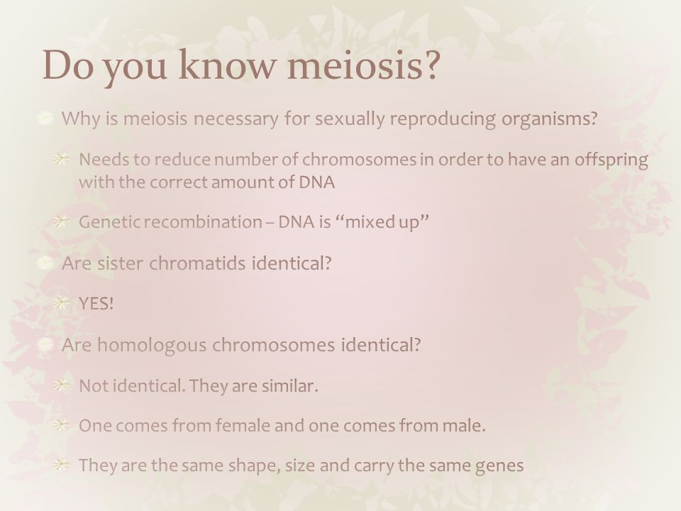 Do you know meiosis?