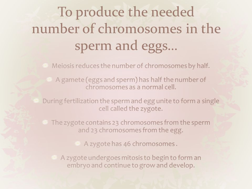 To produce the needed number of chromosomes in the sperm and eggs…