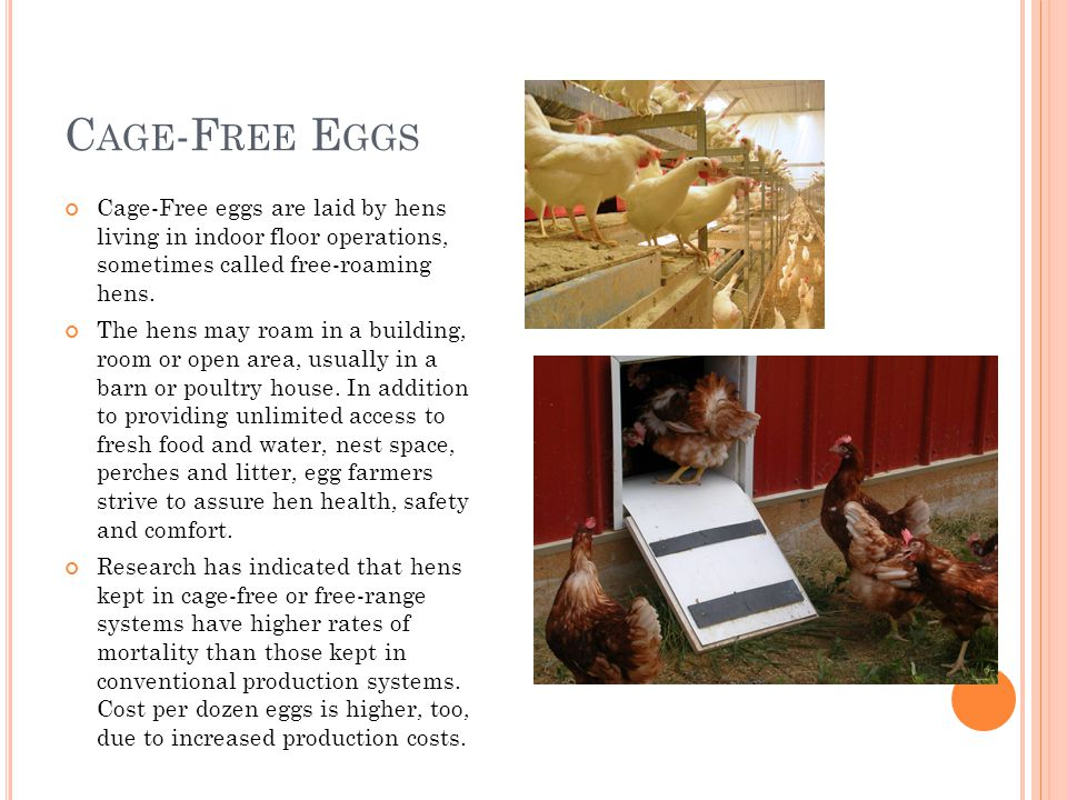 C AGE -F REE E GGS Cage-Free eggs are laid by hens living in indoor floor operations, sometimes called free-roaming hens.