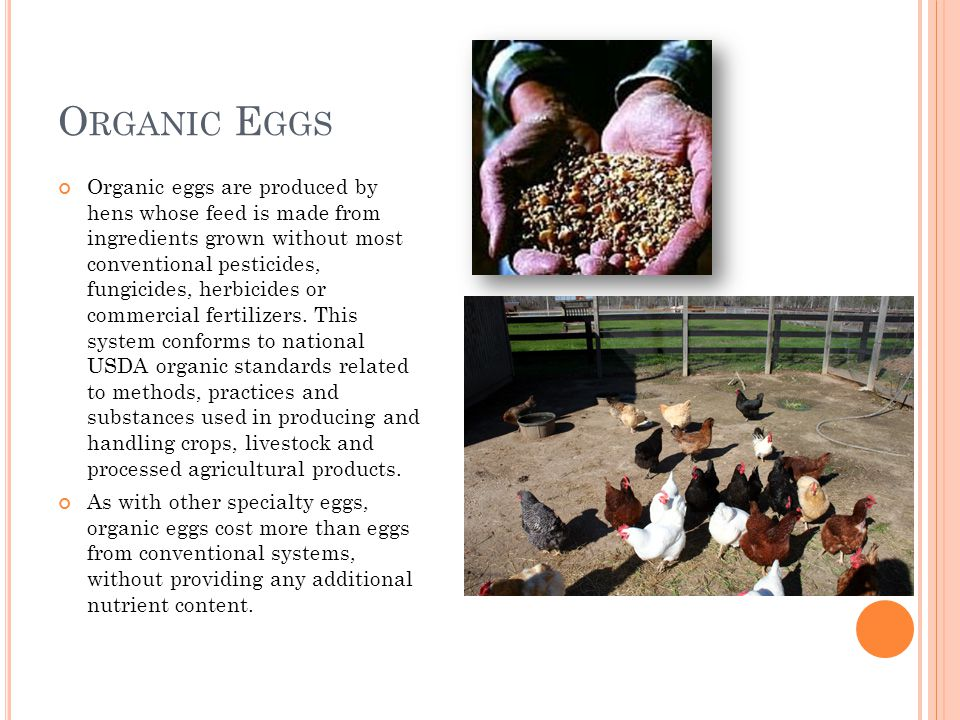 O RGANIC E GGS Organic eggs are produced by hens whose feed is made from ingredients grown without most conventional pesticides, fungicides, herbicides or commercial fertilizers.