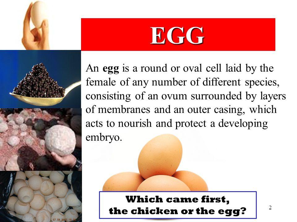 Edible egg: Chicken egg Quail egg Duck egg Goose egg Ostrich egg Turtle egg Fish egg: roe and caviar 3
