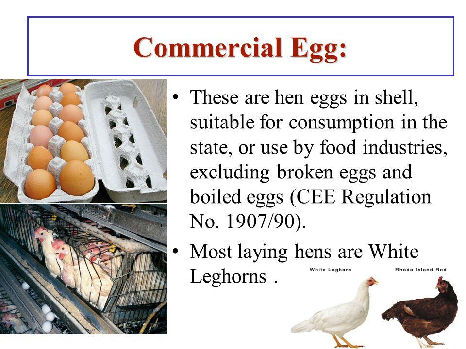 85 Video: Egg Breaker