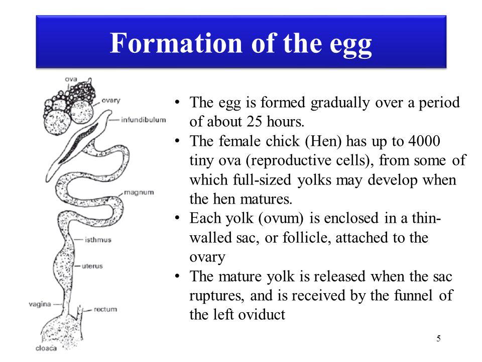 86 Video: Egg Breaker