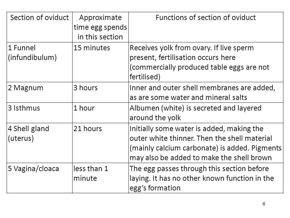 Egg White Index Egg white index (EWI) Height of thick albumen EWI = diameter of thick albumen (longest+shortest)/2 Newlaid Egg has the value: 0.050 – 0.174 Good quality if the value: 0,090 – 0,120 57