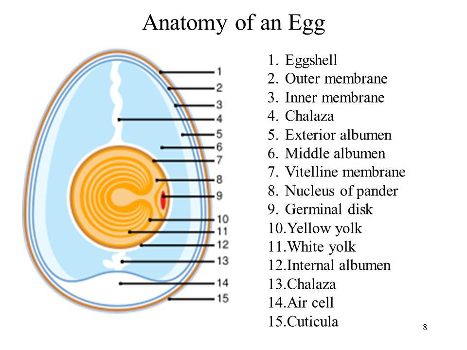 Haugh Unit Haugh unit (HU) HU= 100 log [h-(G(3w 0.37 -100)+1,9] 100 HU= Haugh unit h = heigh of thick albumen (mm) G= 32,2 w= whole egg weight (g) 59 Fresh egg: HU=100 Good quality: HU = 75; acceptable until 50 Bad quality (Spoiled egg): HU < 50