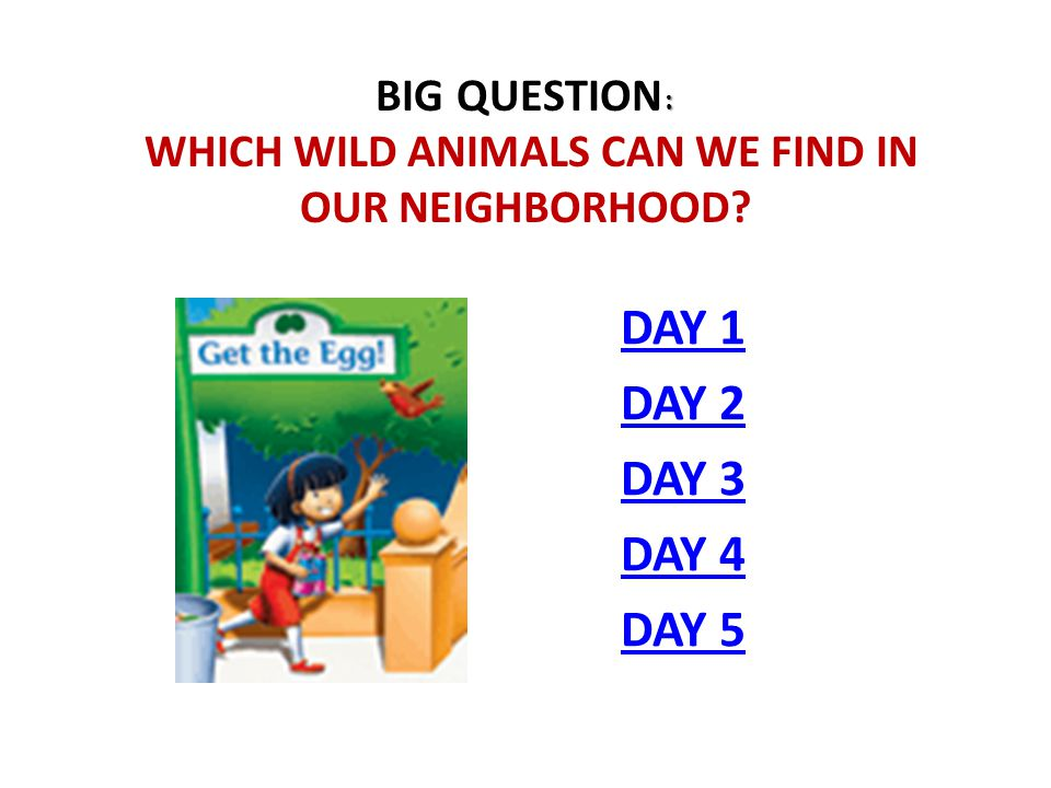 : BIG QUESTION : WHICH WILD ANIMALS CAN WE FIND IN OUR NEIGHBORHOOD? DAY 1 DAY 2 DAY 3 DAY 4 DAY 5