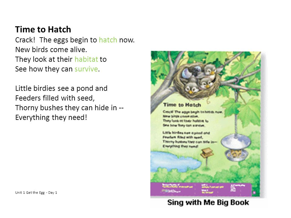 Time to Hatch Crack! The eggs begin to hatch now. New birds come alive. They look at their habitat to See how they can survive. Little birdies see a p