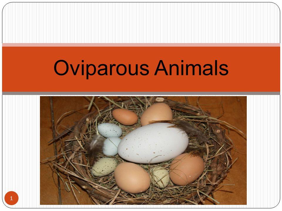 Oviparous Animals 1