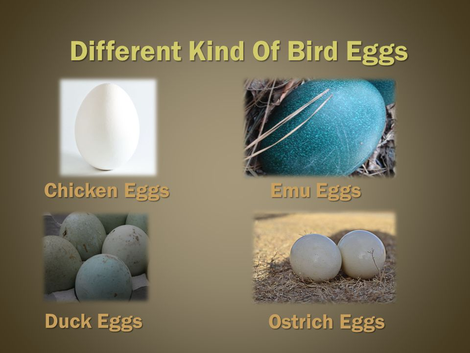Ostrich Eggs Different Kind Of Bird Eggs Chicken Eggs Duck Eggs Emu Eggs