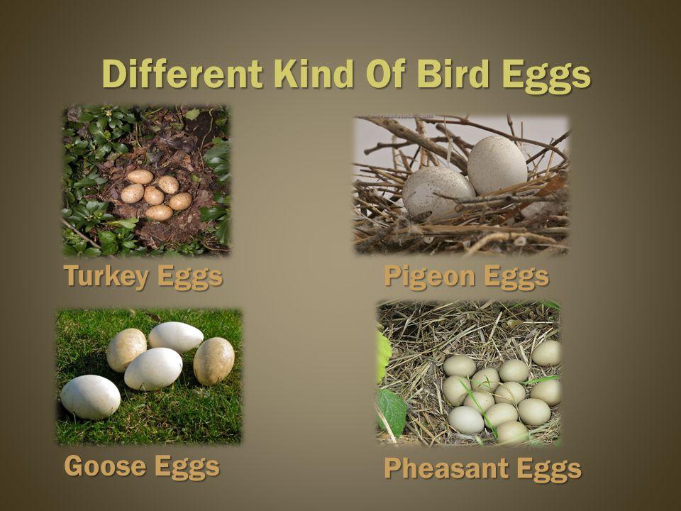 Pheasant Eggs Different Kind Of Bird Eggs Turkey Eggs Goose Eggs Pigeon Eggs