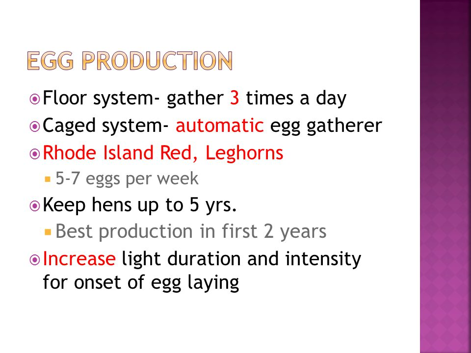 Floor system- gather 3 times a day Caged system- automatic egg gatherer Rhode Island Red, Leghorns 5-7 eggs per week Keep hens up to 5 yrs.