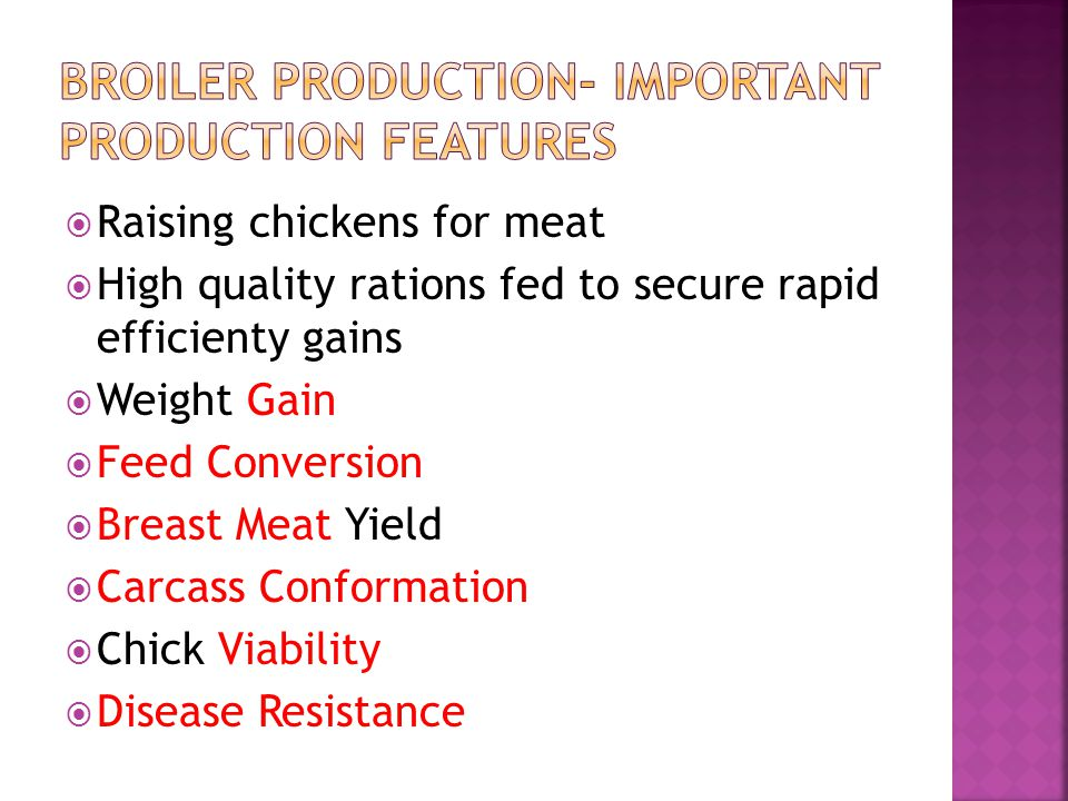 Raising chickens for meat High quality rations fed to secure rapid efficienty gains Weight Gain Feed Conversion Breast Meat Yield Carcass Conformation